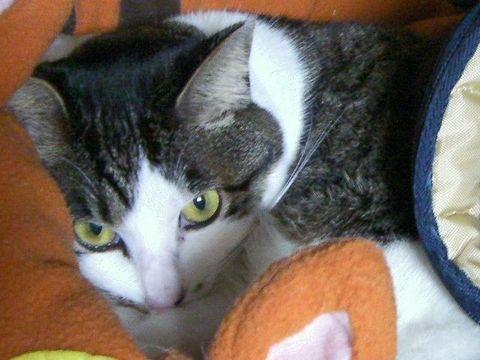 Mikan20110312b