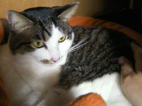 Mikan20110312d