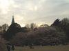 Sakura_gyoen03