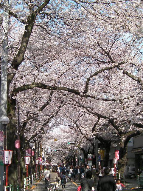 Sakurast01