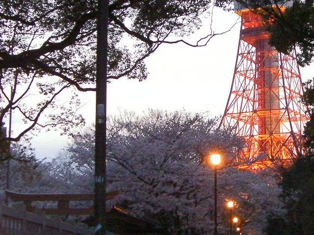 Sakuratower