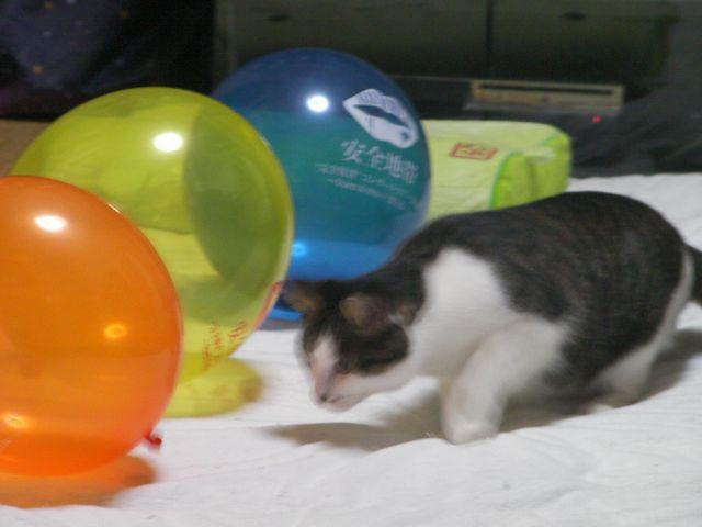 Mikan_balloon