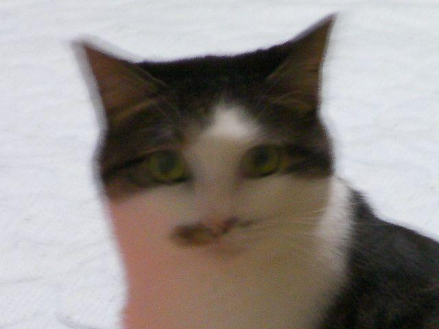 Mikan20120908d